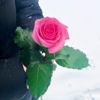 Rose Roses per Piece 70-80 cm